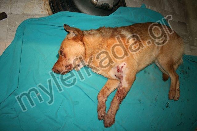 Έγκλημα σε βάρος ζώου στην Λευκάδα...