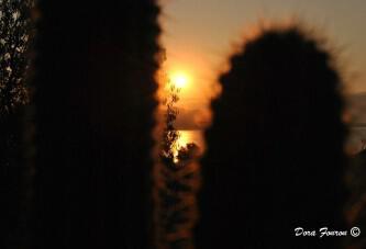 Το πρώτο φως της μέρας