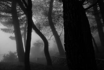 Hills of mist