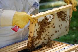 Γ΄ Πανελλήνιο Επιστημονικό Μελισσοκομικό Συνέδριο